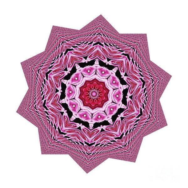 Digital Effect Photograph - Loving Rose Mandala By Kaye Menner by Kaye Menner