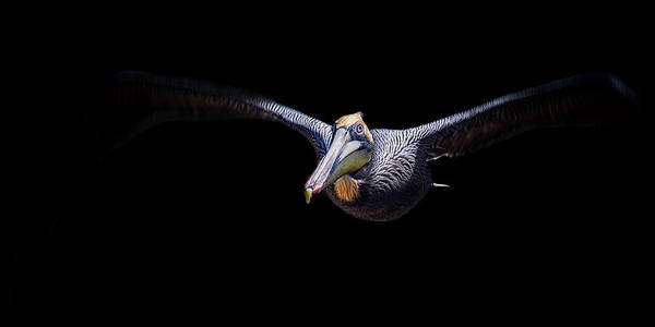 Photograph - Low Flight by Ghostwinds Photography