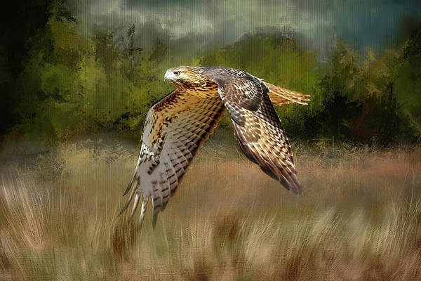 Harrier Photograph - Low Flyer-northern Harrier by Donna Kennedy