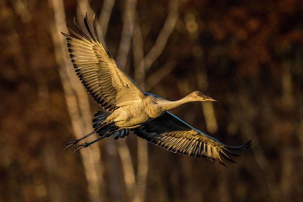 Wall Art - Photograph - Low Light Crane by Paul Freidlund