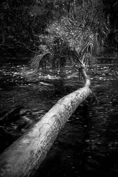 Wall Art - Photograph - Low Palm by Marvin Spates