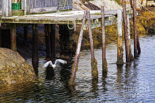 Photograph - Low Tide At Peggy's Cove 8 by Tatiana Travelways