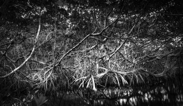 Mangrove Wall Art - Photograph - Low Tide Bw by Marvin Spates