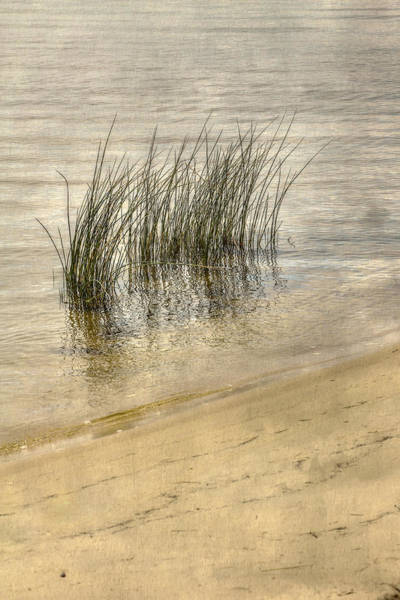 Tides Digital Art - Low Tide Grass by Randy Steele