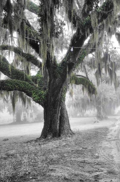Photograph - Lowcountry Live Oak by Scott Hansen