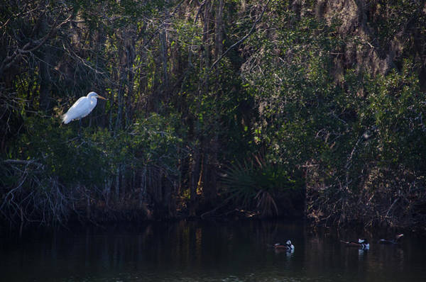 Photograph - Lowcountry Marsh Gathering by Dale Powell