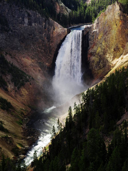 Lower Falls At Yellowstone Art Print
