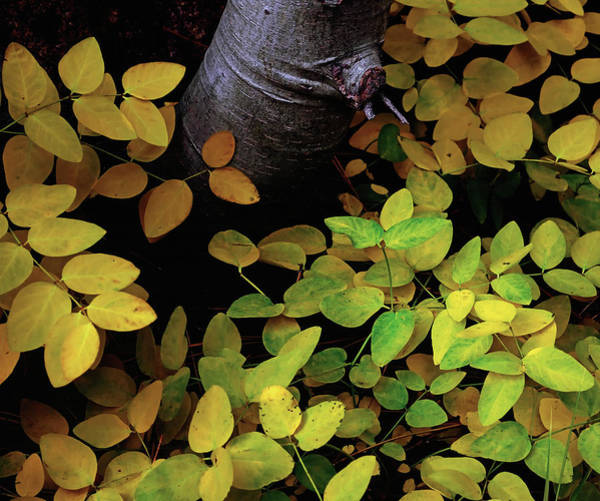 Photograph - Lower Leaf Level by Paul Breitkreuz