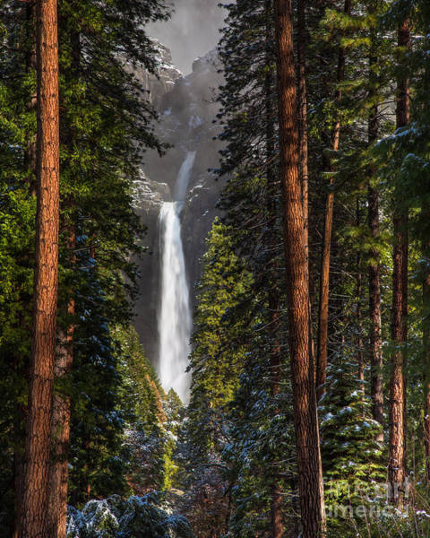 Photograph - Lower Yosemite Falls by Anthony Bonafede