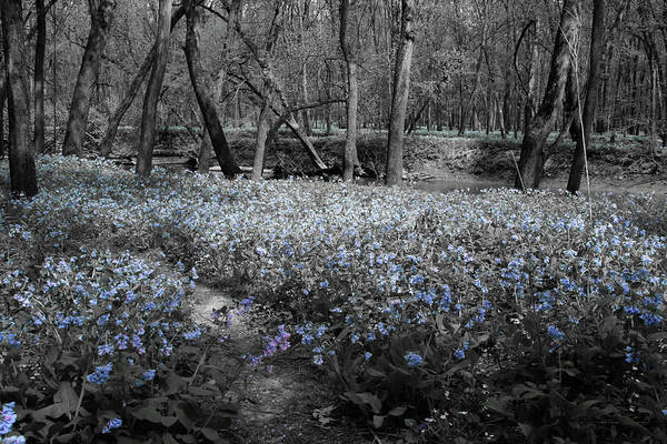 Photograph - Lowland Blues by Dylan Punke