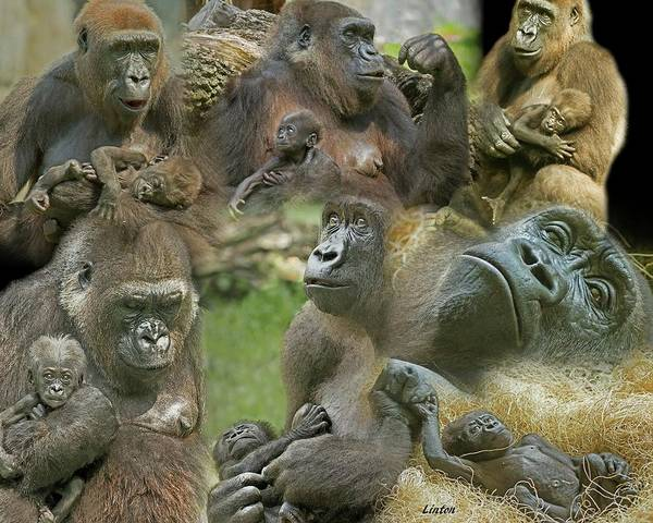 Photograph - Lowland Gorilla Montage by Larry Linton