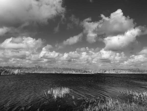 Neiman Photograph - Loxahatchee 4698 by Bob Neiman