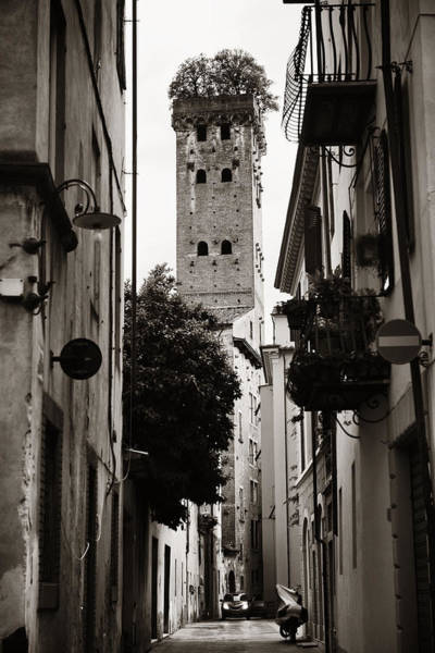 Photograph - Lucca Torre Alberata by Songquan Deng