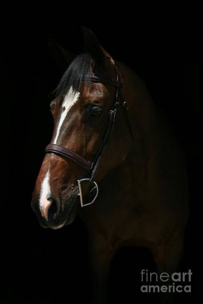 Photograph - Lucia-cora17 by Life With Horses