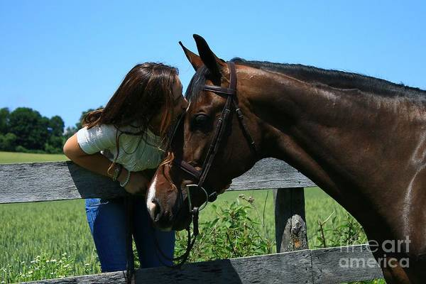 Photograph - Lucia-cora24 by Life With Horses