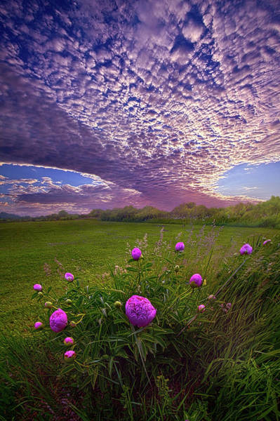 Photograph - Lucky Charms by Phil Koch