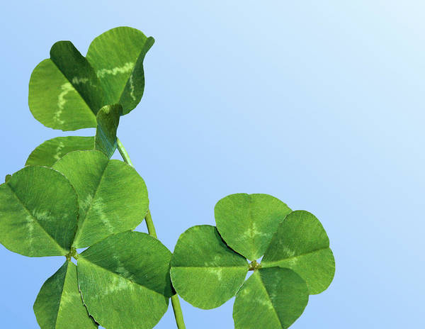 Four Leaf Clover Photograph - Lucky by Kristin Elmquist