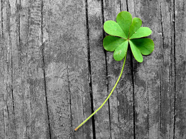 Four Leaf Clover Photograph - Lucky by Shannon Blanchard