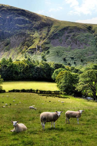 Photograph - Lucky Sheep by Sarah Couzens