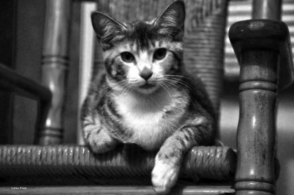 Photograph - Lucy 2 Bw by Lesa Fine