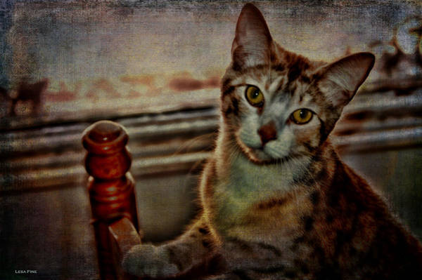 Photograph - Lucy by Lesa Fine