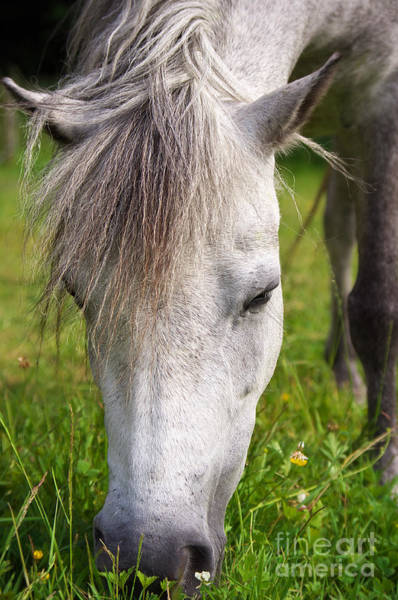 Wall Art - Photograph - Lulu The Welsh Pony by Angela Doelling AD DESIGN Photo and PhotoArt