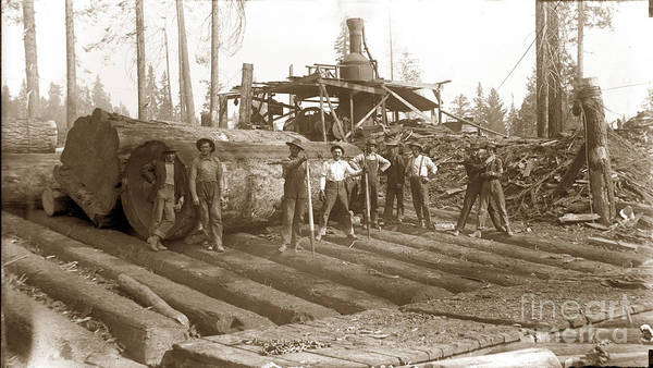 Photograph - lumberjack with Redwood logs and steam donkey circa 1900 by California Views Archives Mr Pat Hathaway Archives
