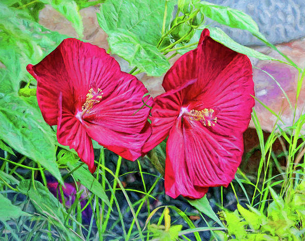 Painting - Luna Hibiscus 9711 - Painting by Ericamaxine Price