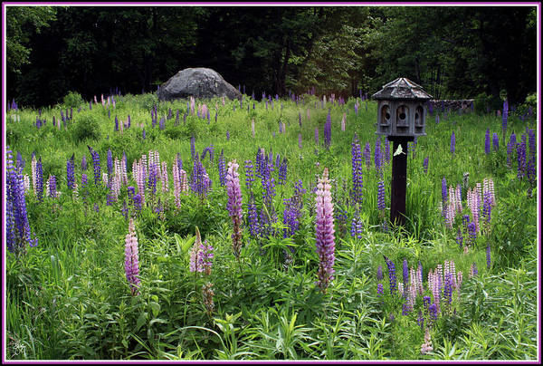 Photograph - Luna On Birdhouse In Lupines by Wayne King