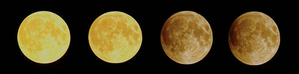 Photograph - Lunar Eclipse Progression by Peter Ponzio