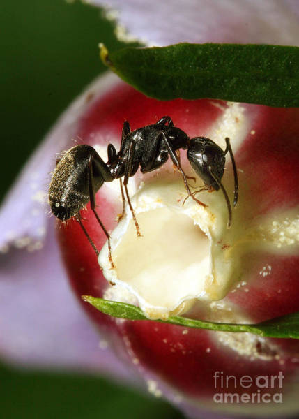 Photograph - Lunch Time by Geoff Crego