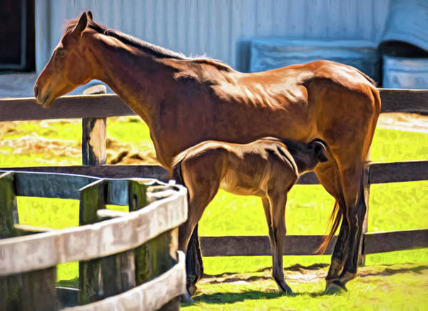 Mare And Foal Photograph - Lunch Time - Paint by Steve Harrington