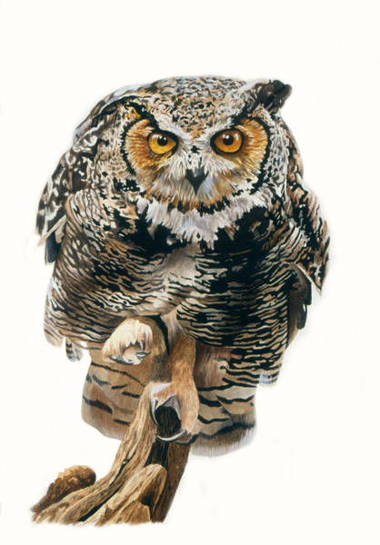 Painting - Lunchtime - Great Horned Owl by Bob Nolin