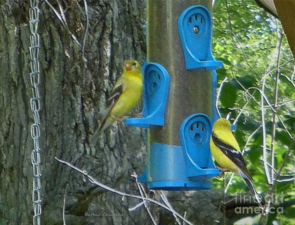 Photograph - Lunchtime At The Feeder by Kathie Chicoine