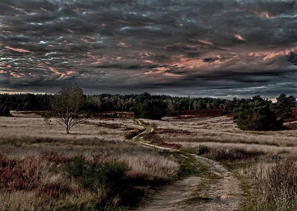 Heath Photograph - Luneburg Heath by Joachim G Pinkawa