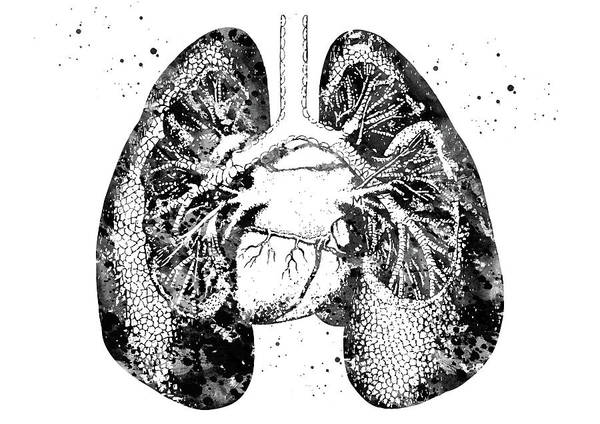 Lung Digital Art - Lungs And Heart 3 by Erzebet S