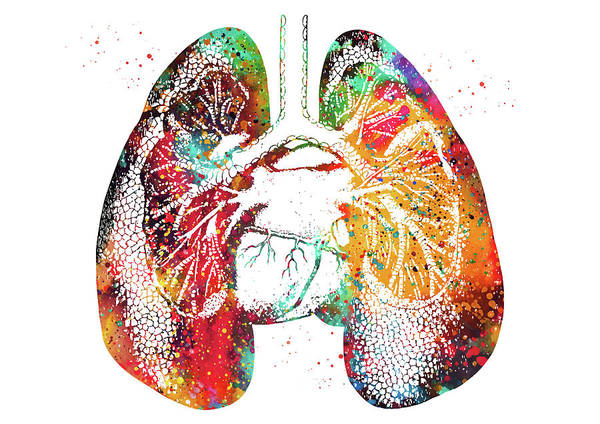 Lung Digital Art - Lungs And Heart by Erzebet S