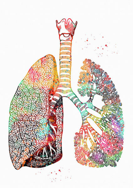 Lung Digital Art -  Lungs Art by Erzebet S