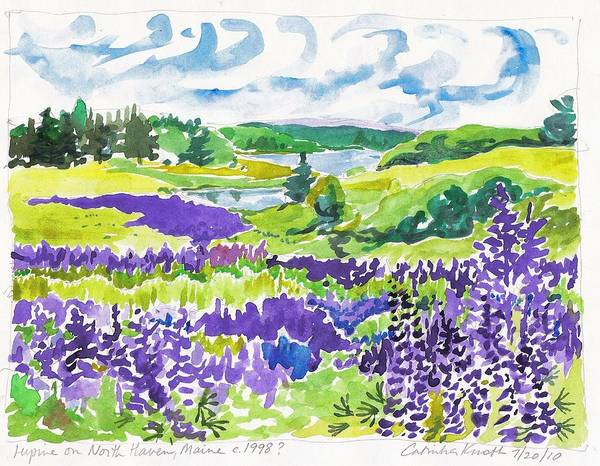 Painting - Lupine On North Haven Maine  by Catinka Knoth