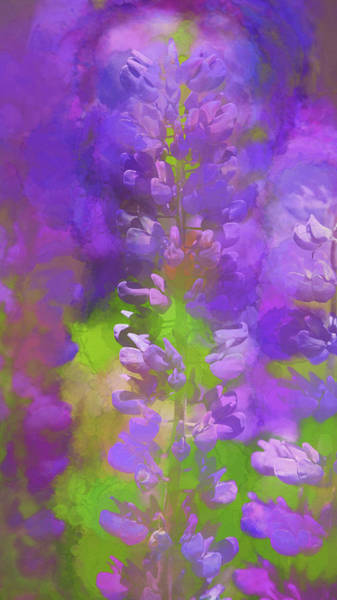 Wall Art - Photograph - Lupine Study - Watercolor Abstract by Stephen Stookey