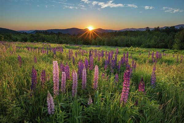 Sun Set Photograph - Lupine Sunrise by Chris Whiton