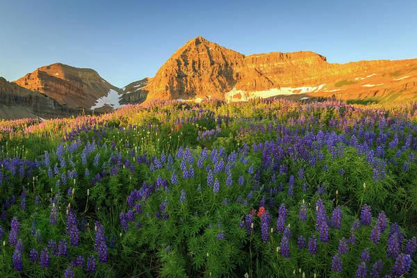 Alpine Meadows Photograph - Lupine Sunrise by Johnny Adolphson