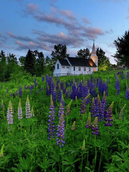 Lupines By The Church Art Print