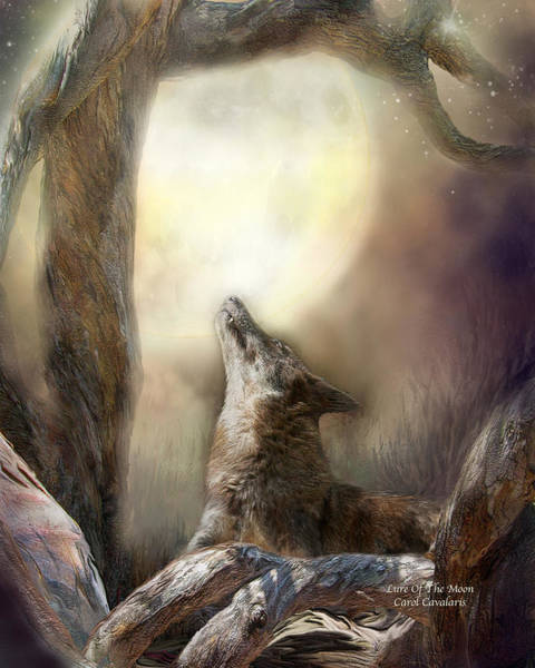 Photograph - Lure Of The Moon by Carol Cavalaris