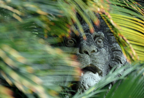Photograph - Lurking In Stone by Bruce Gourley