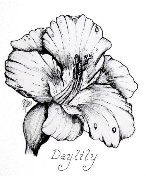Drawing - Luscious Daylily  by Nicole Angell