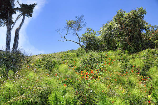 Photograph - Luscious Flora by John M Bailey