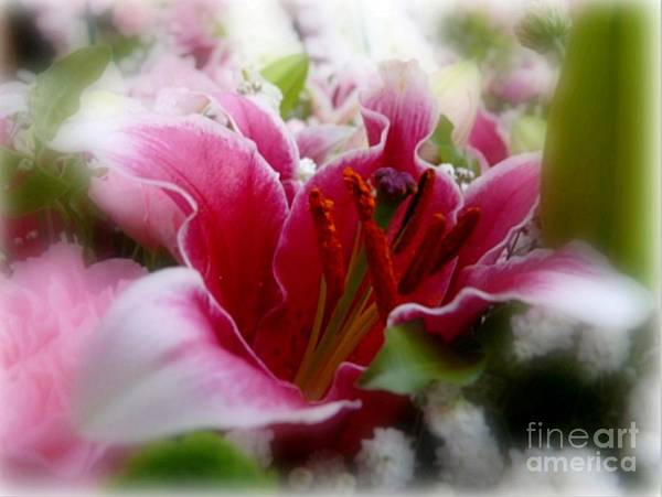 Photograph - Luscious Lily by Morag Bates