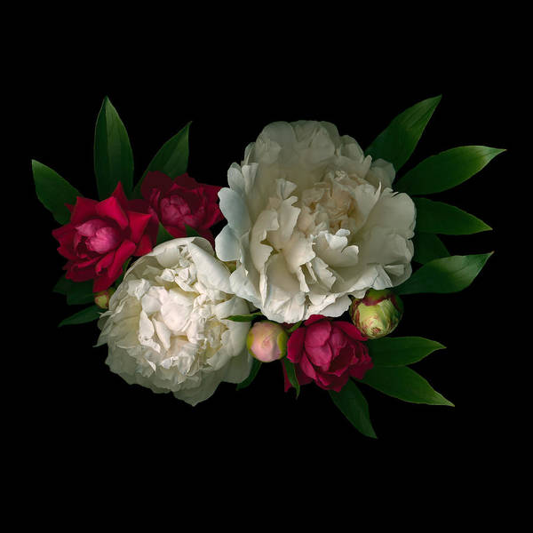 Digital Art - Luscious Peonies by Deborah J Humphries