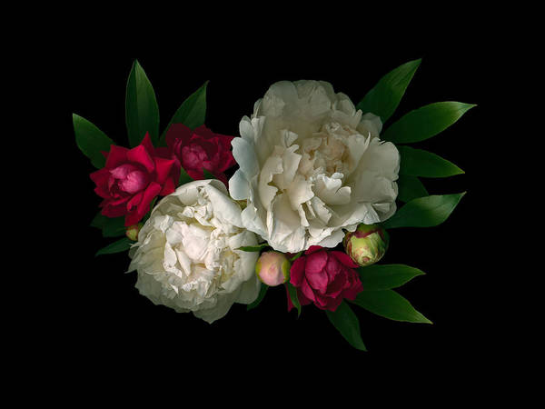 Digital Art - Luscious Peonies Horizontal by Deborah J Humphries